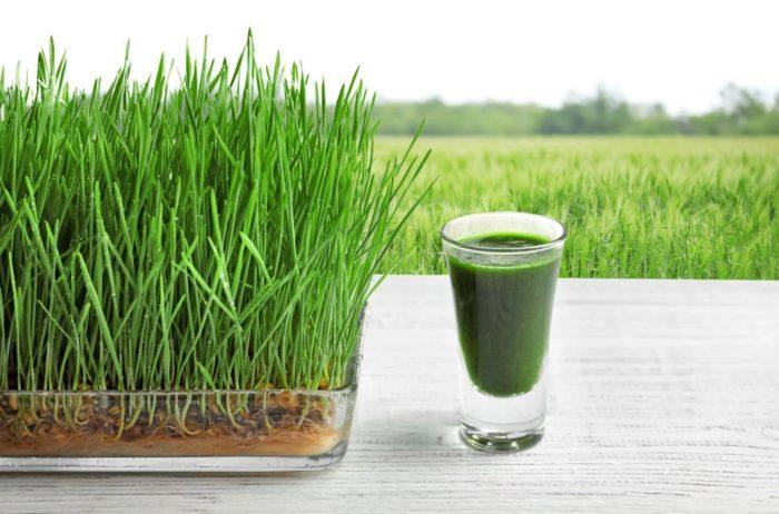 Weight loss by Wheatgrass
