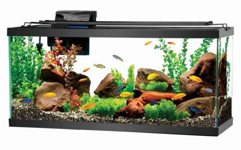 Main benefits of keeping the aquarium in the house